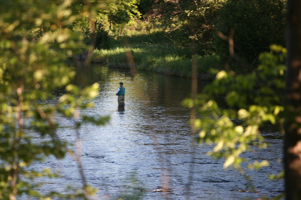 Fishing in Woodford