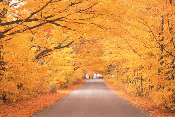 Road lined with golden foliage