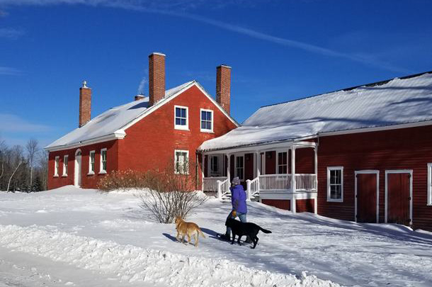 Two dogs play in the snow outside of a red historic home.