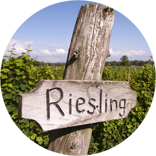 a wooden sign saying resling that stands between rows of green grape vines