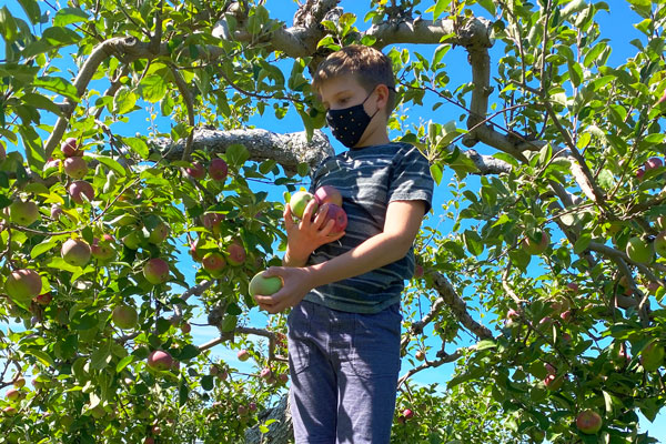 Picking apples at the Shelburne Orchard
