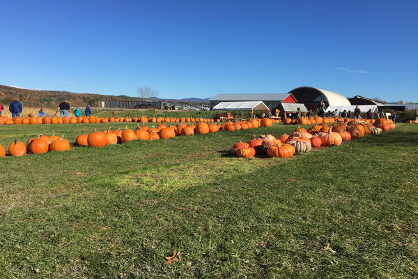 Whitcombs Land of Pumpkins and Corn Maze