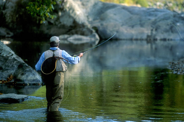 A fly fisherman casts a line into stream.