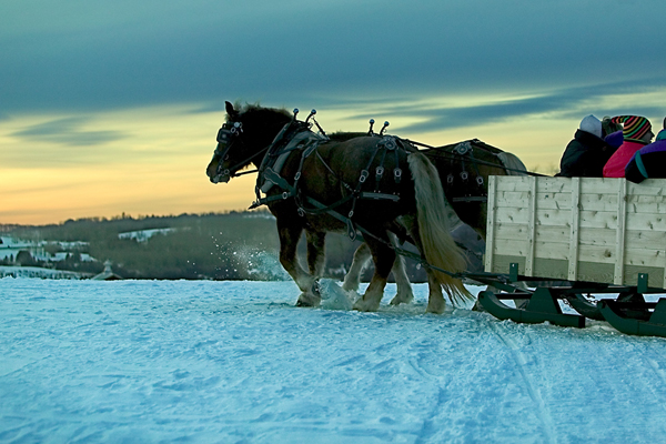 Group of people enjoy a horse drawn sleigh ride at dusk.