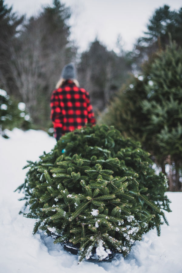 Cut your own holiday tree